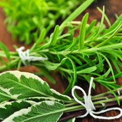 Herbs_3