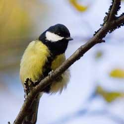 atracting-bird-1