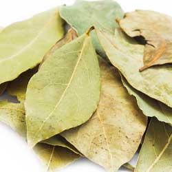 bay-herb-1