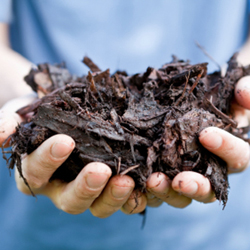 Gardener Holding Tree Bark Mulch