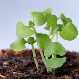 seed_starting_3
