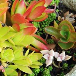 succulent-2