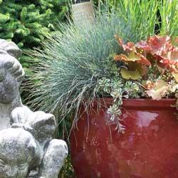 year-round-container-gardening-1